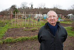 © Licensed to London News Pictures.  002/02/2015. Bristol, UK.  Brian Farley aged 74 who has had an allotment at Stapleton for 39 years and will lose his allotment if a bus junction is built. Campaigners against the Bristol Metrobus junction which is planned to replace allotments by the M32 have occupied some trees due to be cut down.  Some campaigners are sitting in nets and platforms in the trees but expect an attempt will be made to evict them.  Security contracters are putting up fencing. The land is exceptionally fertile and has traditionally been used for market gardens and allotments, but part has been designated for a bus junction off the motorway to help improve transport in Bristol.  Bristol is this year's European Green Capital. Photo credit : Simon Chapman/LNP
