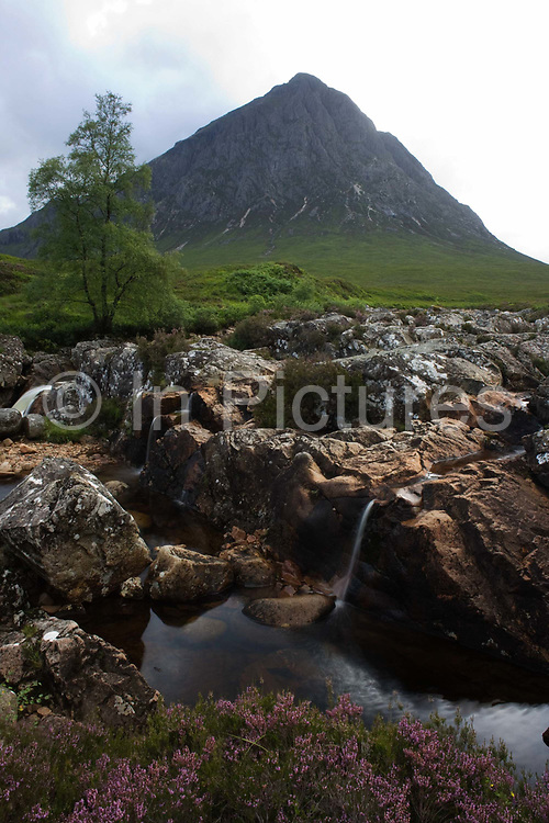 Scottish Stob Dearg mountain and rocky River Coupall amid magical scenery in Glencoe, Scotland. An upright image looking over a clump of native heather (famous and abundant on Scottish moors and glens) and past the rounded rocks of this mountain stream as it heads down into the nearby River Etive - then eventually out into the Atlantic Ocean. Stob Dearg is a postcard favourite due to its dramatic pyramid-shaped peak that rises 1,022 feet above sea level. The scene looks wild and adventurous, attracting walkers and climbers to this much-visited area of Scotland.