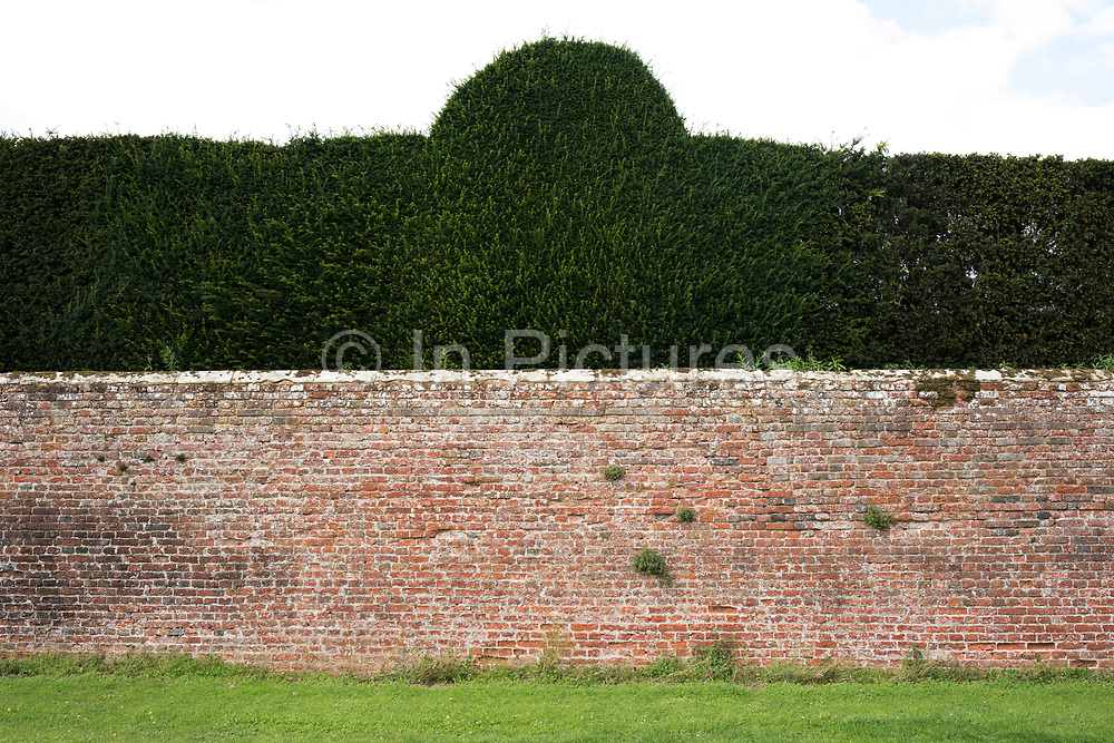 Wall and topiary hedge at Hever Castle in Hever, England, United Kingdom.