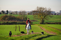 A woman on a horse with dogs enjoys a ride through the beautiful late autumn landscape near Stagsden Bedfordshire England, UK. Some parts of Southern England enjoyed mild sunny weather over the weekend, though it is expected to be colder next week.Sunday, 1st December 2013. Picture by Jonathan Mitchell / i-Images