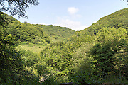 Wooded steep sided valley Pantygasseg Road, Pontypool, Torfaen, Monmouthshire, South Wales, UK