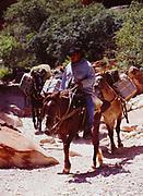 Packtrain hauling gear and mail on the Havasu Trail through Hualapai Canyon between Hualapai Hilltop and the village of Supai, Havasupai Indian Reservation, Grand Canyon, Arizona.