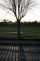 Winter sunset through bare tree at local park in Sallynoggin Dublin Ireland