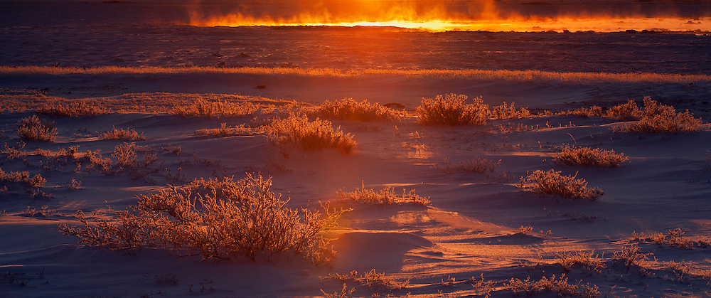 Panorama of the evening backlight against hoarfrost covered vegetation on the open tundra<br /> Churchill<br /> Manitoba<br /> Canada