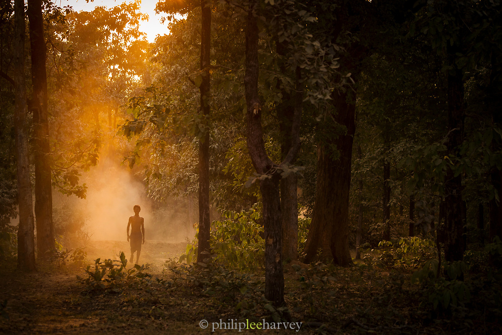 Young boy walking in a forrest near Saptura National Park. Sohagpur, Madhya Pradesh. India