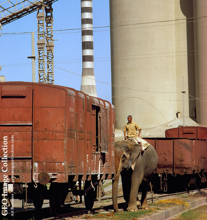 A cement factory uses elephants as work animals.