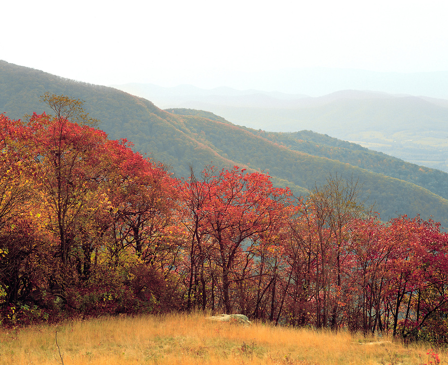 The trees along Skyline Drive, in Shenandoah National Park, Virginia, turn shades of auburn and gold as fall deepens.