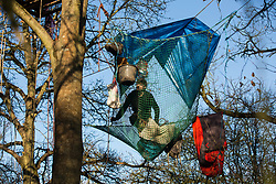 Harefield, UK. 21 January, 2020. An activist moves across a net suspended between trees at the Save the Colne Valley wildlife protection camp. Activists seeking to protect ancient woodland threatened by the HS2 high-speed rail link continue to occupy both the roadside and woodland sites of the camp having retaken it from bailiffs acting on behalf of HS2 on 18th January. 108 ancient woodlands are set to be destroyed by HS2.