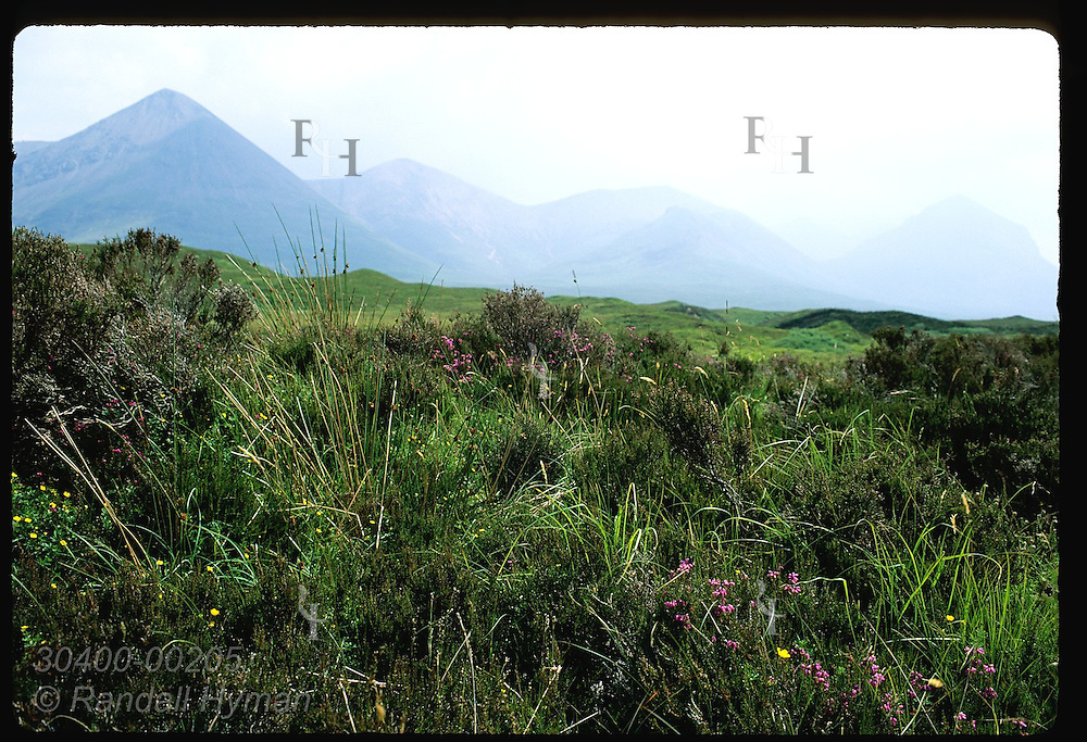 Wildflowers and grasses catch spot of sun as mist clears off distant mountains; Isle of Skye. Scotland