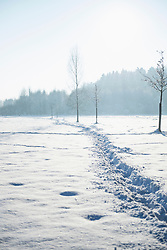 Footprints in snow landscape, Bavaria, Germany