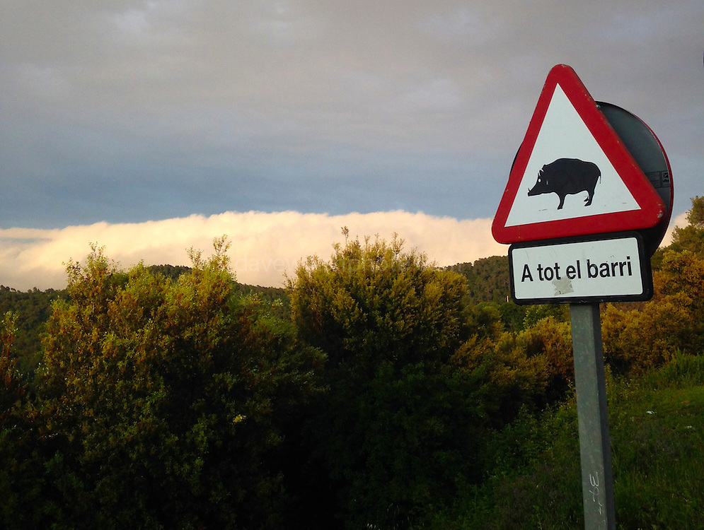 Poster warning of presence of wild boar in Las Planes, Sant Cugat del Valles, Catalonia, Spain.