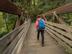 United States, Washington, Bellevue, Coal Creek Natural Area.  Guided hike.