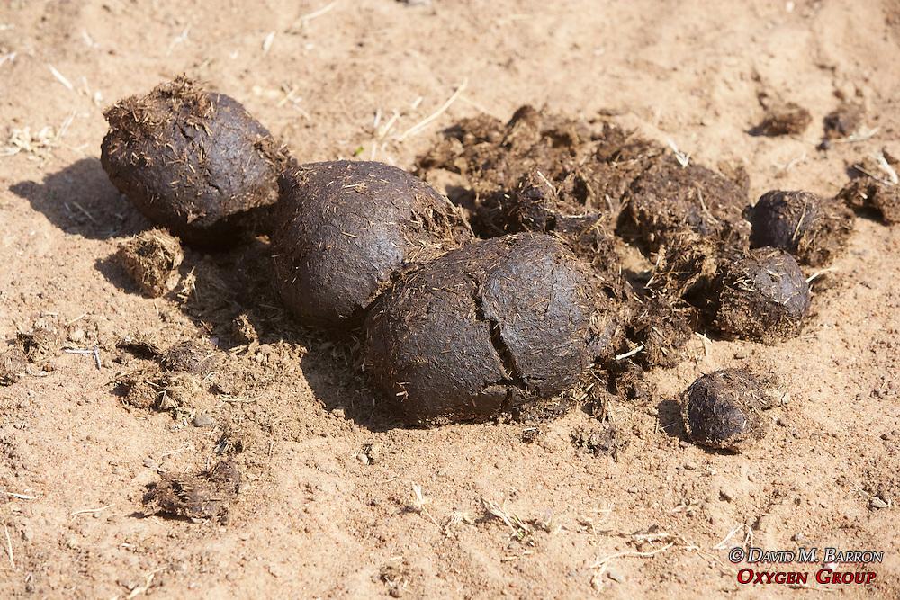 Rhino Poo
