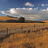 Oak trees dot rolling pastures.