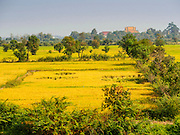 27 FEBRUARY 2015 - PONHEA LEU, KANDAL, CAMBODIA:  Rice fields in Kandal province, north of Phnom Penh,  Cambodia.   PHOTO BY JACK KURTZ