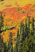 Fall color in Paradise Valley, Mount Rainier National Park, Washington