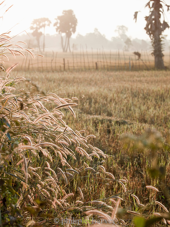 Crops blow in the wind near a rice paddy in rural Cambodia