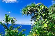 Lush vegitation on the Kalalau Trail on the Na Pali Coast, Island of Kauai, Hawaii