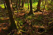 Boreal forest <br />Sioux Narrows Provincial Park<br />Ontario<br />Canada