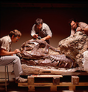 The T.rex called Sue was excavated and prepared by the Black Hills Institute.  Founders Pete (left) brother Neal Larson (Center) and Bob Farrar (right).