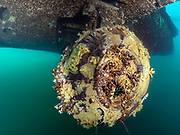 Zebra mussles on the Aircraft Challenger 600 landing gear at Dutch Springs, Scuba Diving Resort in Pennsylvania