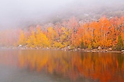 Fall color and fog at North Lake, Inyo National Forest, Sierra Nevada Mountains, California USA