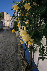 Europe, Portugal, Obidos. Yellow roses climb whitewashed house on narrow street leading to castle.
