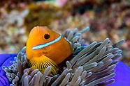 Scuba Diving Asia