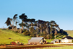 Towering Cypress trees break the wind for a Los Osos farm in the California Central Coast of San Luis Obispo County.