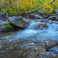 Fall-colored aspens grow along Bishop Creek in the eastern Sierra Nevada above Bishop, California.