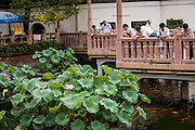 Tourists on the zigzag bridge view lotus at the Huxinting Teahouse in Yu Yuan Gardens Shanghai, China