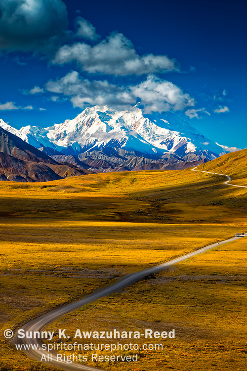 Mount Denali (McKinley), viewed from Stony Hill. Fall color tundra and Park Road are in the foreground.  Denali National Park & Preserve, Alaska, Autumn. Vertical image.