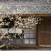 Traditional Japanese house in rural Japan with tree in front