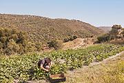 LOLLOVE Sardinia: Lollovers inn vegetable garden, Simone at work