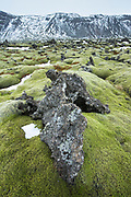 Lava field with lichen in Reykjanes Geopark UNESCO area of global geological diversity - volcanic and geothermal activity. Mid-Atlantic ridge, reykjanes Peninsula, South Iceland