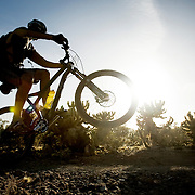 The trails at Lost Dog Wash Trail Head in North Scottsdale, AZ are great for walkers, runners or mountain bikers. Visitors get a chance to explore the high desert and its saguaro cactus, creosote and other desert plants life...
