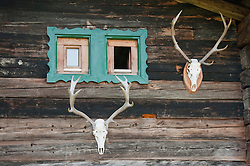Wooden hut with deer antler and window, Salzburger Land, Austria