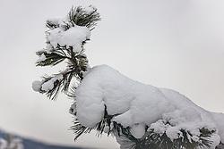 THEMENBILD - Neuschnee auf Tannenzweigen, aufgenommen am 13. Dezember 2019, Hinterglemm, Österreich // Fresh snow on fir branches on 2019/12/13, Hinterglemm, Austria. EXPA Pictures © 2019, PhotoCredit: EXPA/ Stefanie Oberhauser