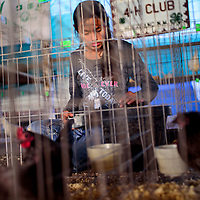 Keyless Etsitty feeds her chickens in the 4-H Club exhibit at the Navajo Nation Fair in Window Rock Thursday.