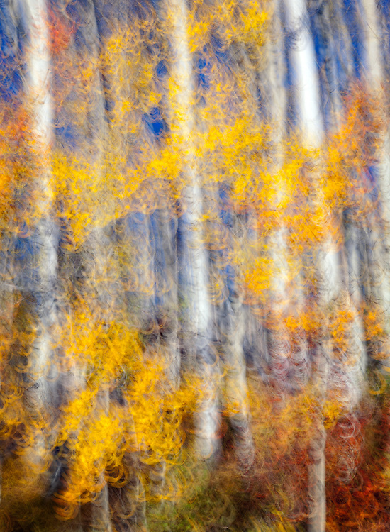 I used camera motion and a slow shutter speed to create an impressionistic image. For this shot, I was moving the camera in a circular pattern during the 1/4-second exposure.