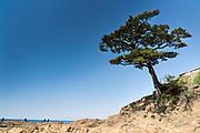 Tree at Tateishi Park Kanagawa Japan