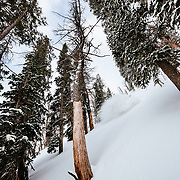 Tanner Flanagan skis the backcountry powder near Jackson Hole Mountain Resort in Teton Village, Wyoming.