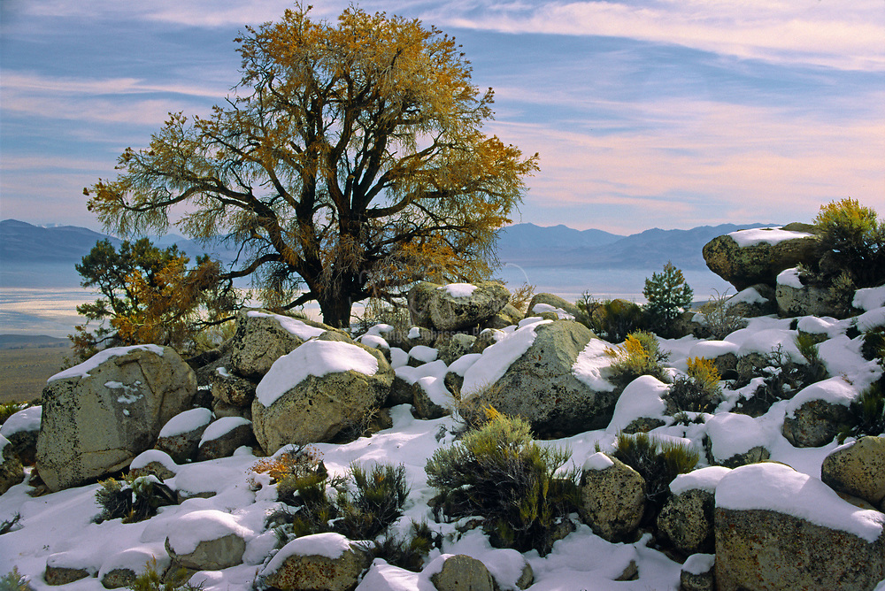 Wintery scene with lonely tree in the Sierra Nevada foothills near the Alabama HIlls in California