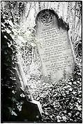 Gravestone with ivy in Arnos Vale Cemetery, Bristol.