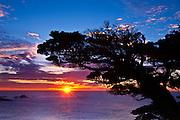 Cypress Tree (Cupressus macrocarpa) at sunset, Point Lobos State Reserve, Carmel, California USA