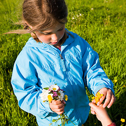 A boy and girl pick flowers in a hay field on a farm in Ipswich, Massachusetts.