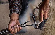 Ferrier Eric Stewart re-shoes some horses in Los Alamos. He has many clients in the region. Images © Thomas Graves