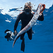 Photographer Douglas Seifert holding a 351-centimeter segment of a Architeuthis giant squid feeding arm, displaying the suction cups lining the tentacular club. The suction cups have sharp, serrated teeth that help the giant cephalopod hold on to its prey. I recovered this giant squid arm segment after seeing a sperm whale (Physeter macrocephalus) breach. Photographed in Ogasawara, Japan.