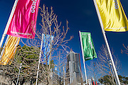 Barangaroo Reserve celebrates its first birthday this month.Red, Yellow, Green and Blue flags seen with one of the Barangaroo skyscrapers in the background.