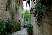 Detail of hanging plants, narrow street or lane, Korcula old town, island of Korcula, Croatia